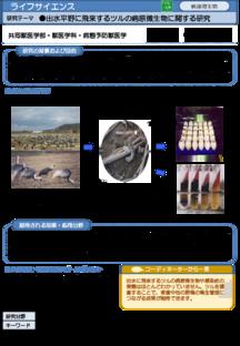 出水平野に飛来するツルの病原微生物に関する研究